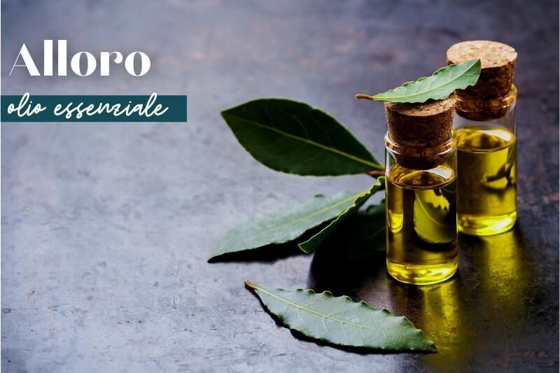 olio essenziale di alloro